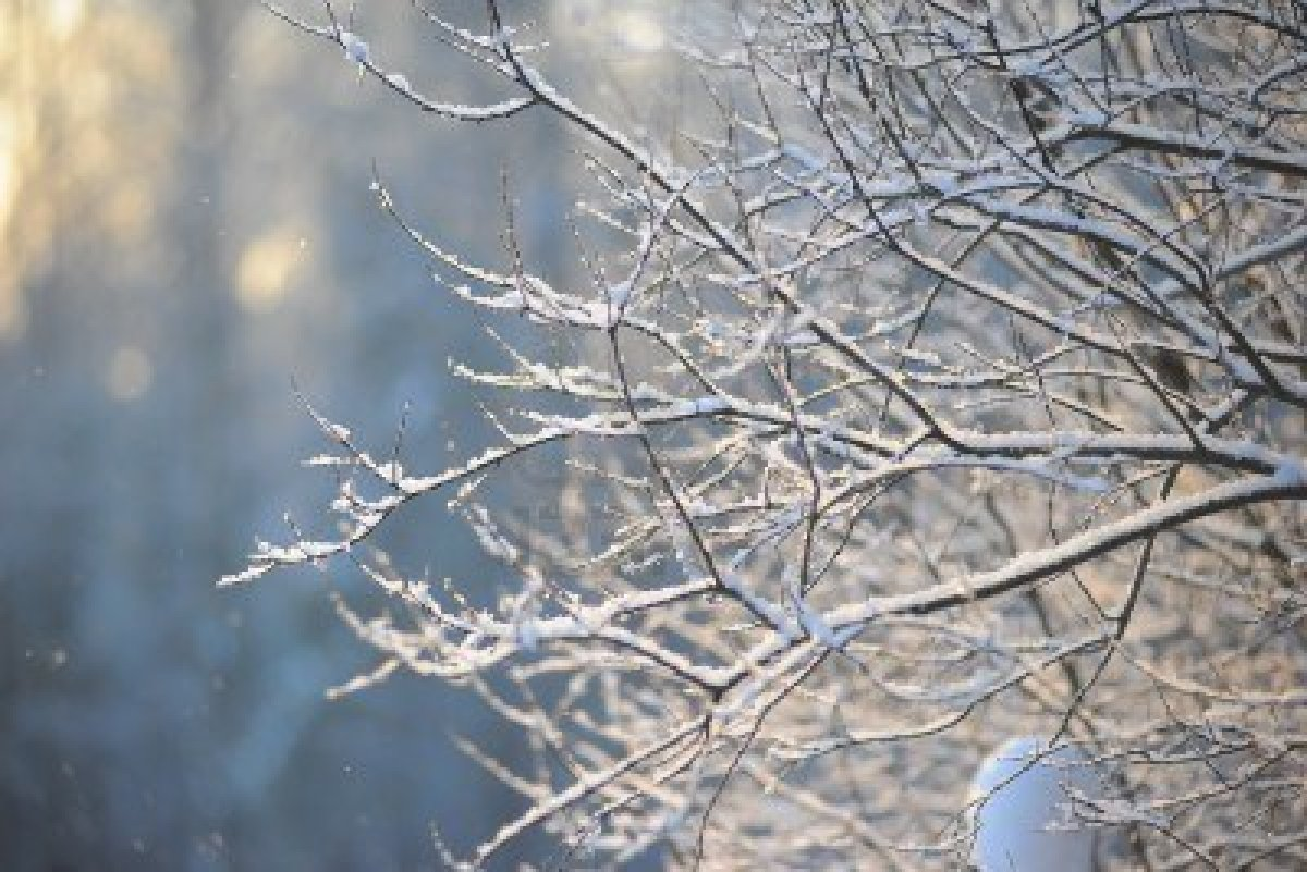 winter-nature-photography-close-up-view-of-winter-nature-royalty-free-stock-photo-pictures