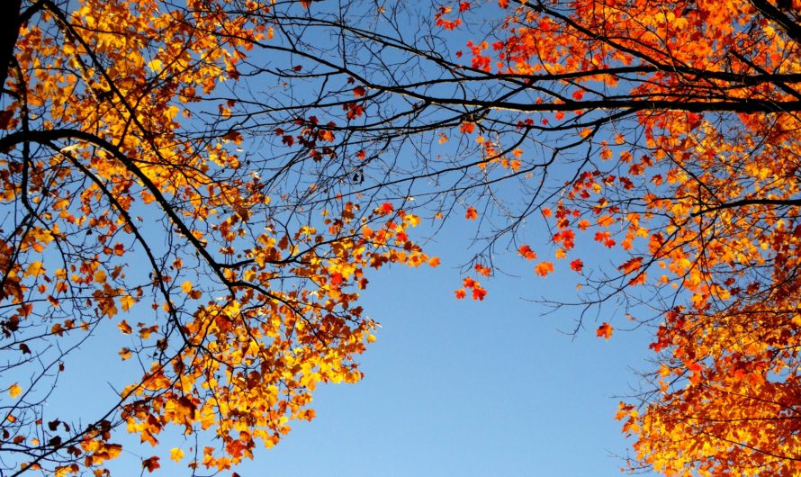 Fall into fall: Activities for everyone