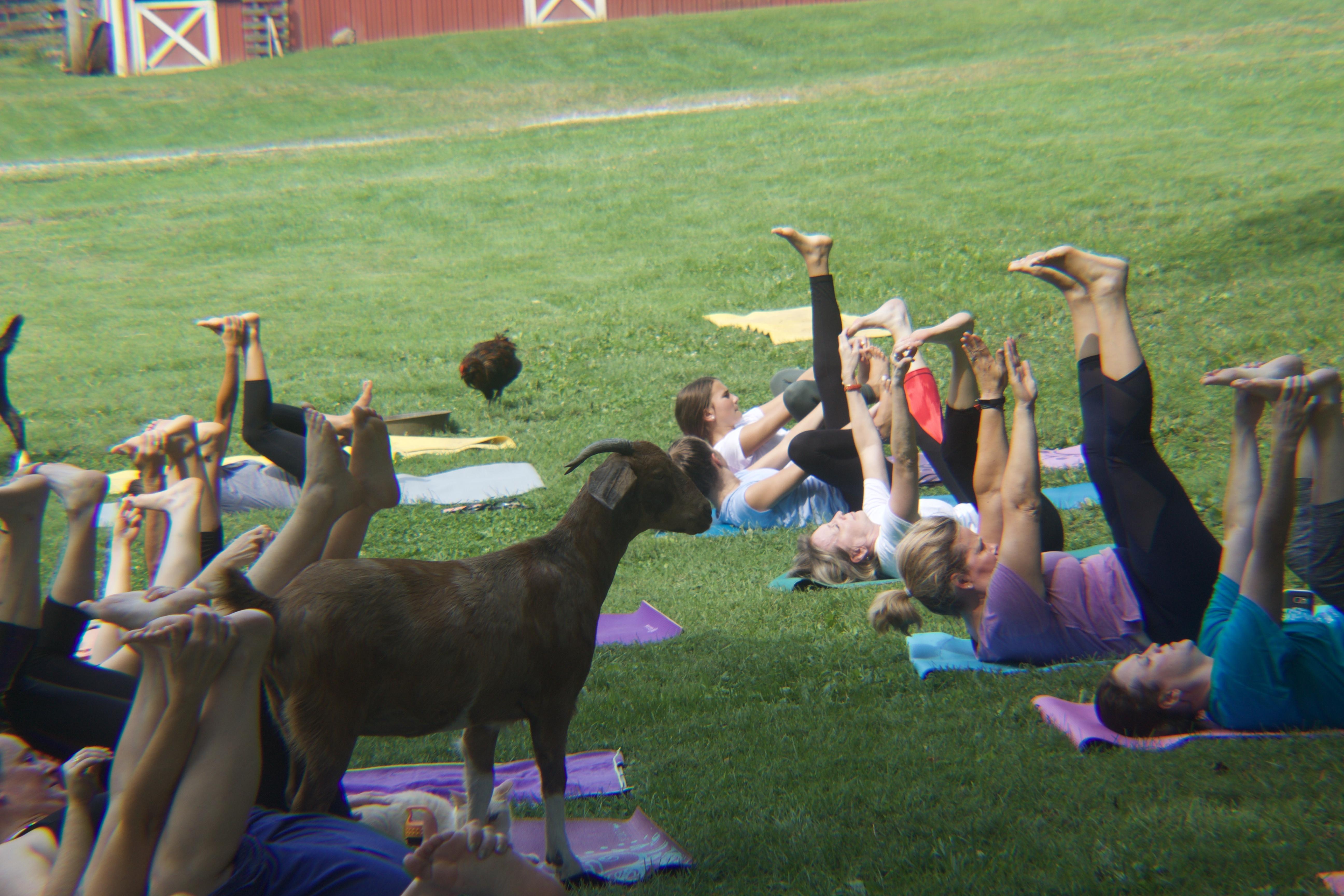 Franklin County farm offers unusual yoga class